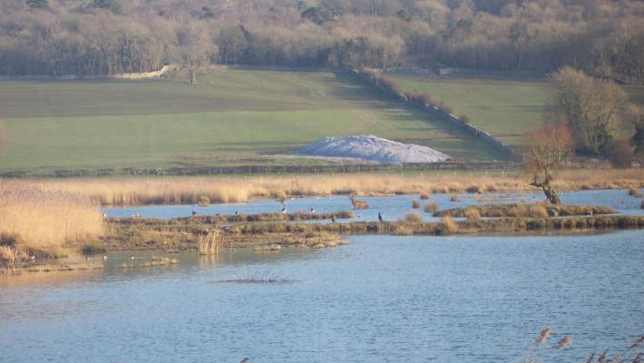 Leighton Moss - wildlife and issues (c) R.J Cooper