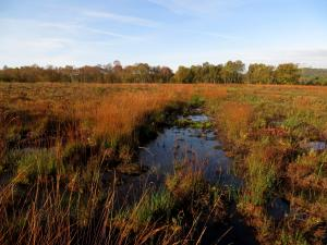 Foulshaw Moss © Philip James Taylor