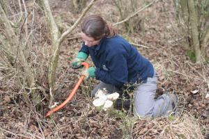 woodland coppicing (c) Martin Wain